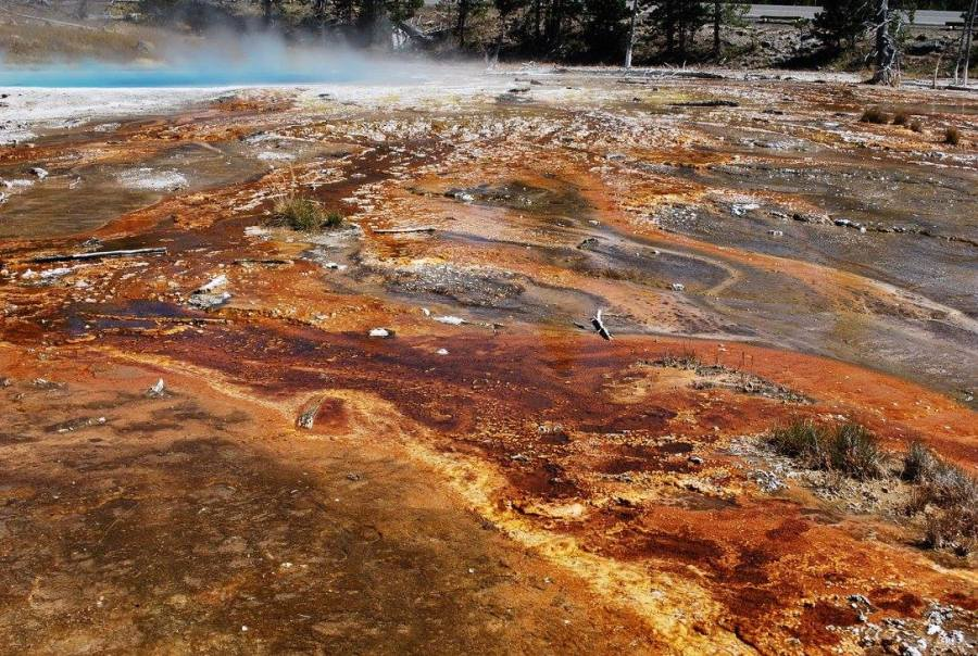 Yellowstone orange ground