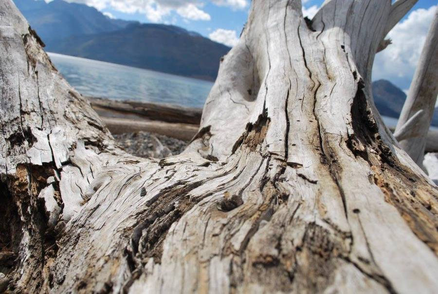 Wood at Grand Tetons National Park