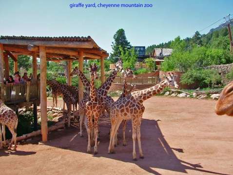 cheyenne-mountain-zoo-by-shelbyforester1223