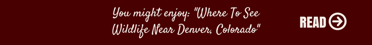 You might enjoy_ Denver Biscuit Company review (23).png