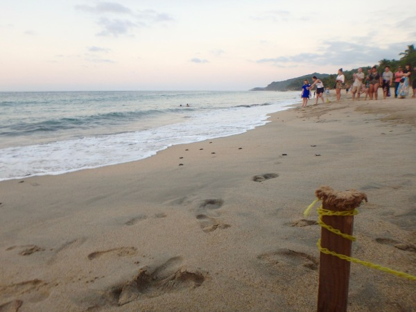 Baby turtle release in Sayulita